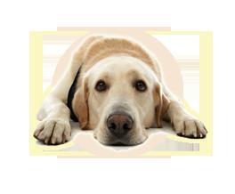 icona-golden-happy-doggy