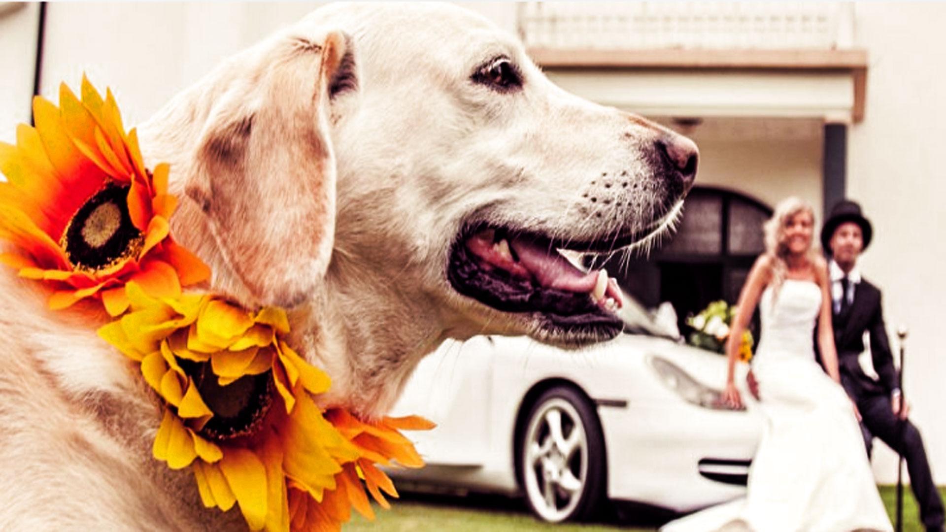 wedding-dog-matrimoni-bologna